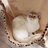ダイニングの椅子が猫用のハンモックに早変わり