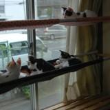 猫のための素敵な自作ハンモック5選