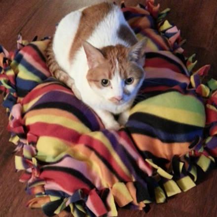 裁縫できなくてもOK!手作りの猫ベッドのDIYアイディア9選
