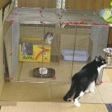 用途に合わせて自由に使える手作り猫ケージのアイディア集