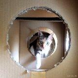 猫が喜ぶ手作りダンボールハウスの豆知識とDIY事例