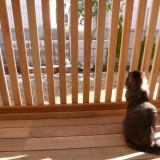 ウッドデッキと猫フェンス