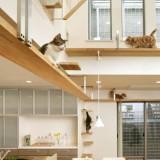 猫のためのハウスデザイン