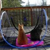 防災セットに入れておくと良いかもしれないアウトドアキャットハウス –Amazon.com : Outdoor Feline Funhouse