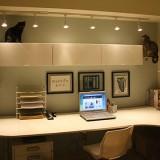 猫が自由に過ごせるオフィス