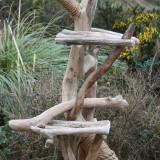 ワイルドな流木キャットタワー