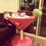 猫のカクテル