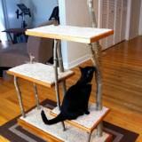 ベニヤ板を枯れ木で支える猫タワー