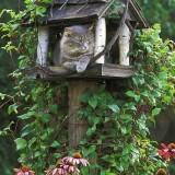 庭の猫小屋