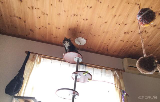 はじめて猫と暮らす人のためのキャットタワーの選び方