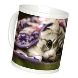 猫の写真でオリジナルのマグカップを作る方法を紹介します。