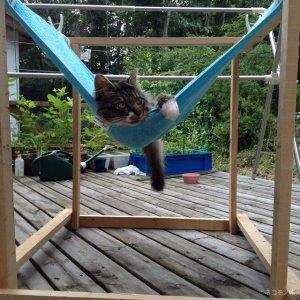 バスタオルと木材を使った猫の手作りハンモックの作り方