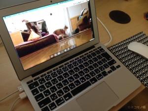 使わなくなったスマホで猫を見守る監視カメラを作る方法