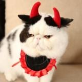 小悪魔のツノが可愛い猫用コスプレセット