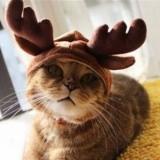 かぶるだけで変身できる猫の帽子セット