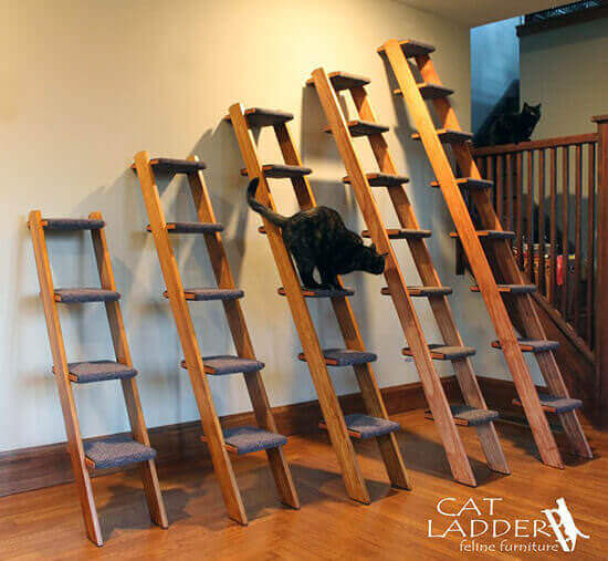 キャットタワーっぽく使えるはしご 猫グッズのネコモノ帳