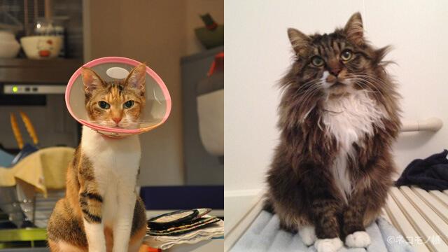 猫2匹と暮らすのにかかった年間費用(2015年版)
