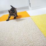 フローリングの部屋でも猫が安全に遊べるタイルカーペット