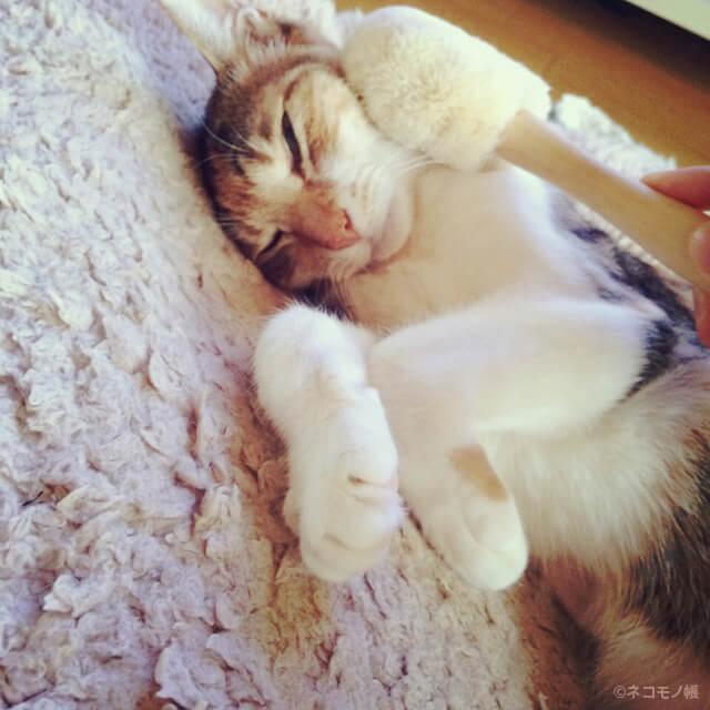 北山正積商店ペット用たわしでブラッシングする猫