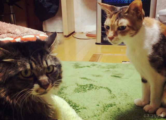 二匹の猫にかかった2016年の年間費用とコスト節約のポイント