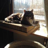 板と麻紐で簡単に作れる猫用ウィンドウベッドの作り方