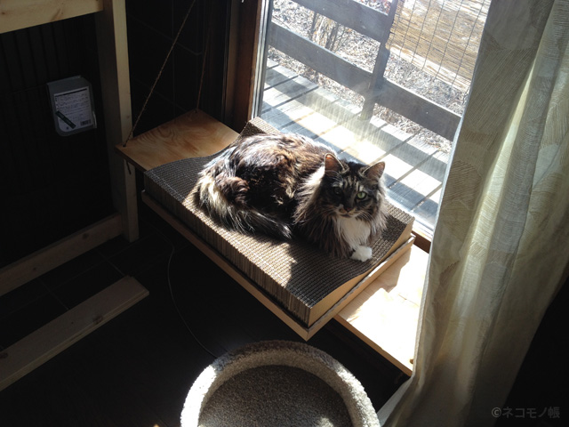 完成したウィンドウベッドで日光浴を楽しむ猫