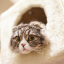 いろいろな猫用ホットカーペットの種類と特徴